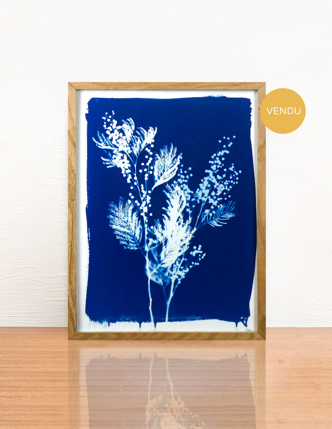 Invincible été - Cyanotype - Mimosa