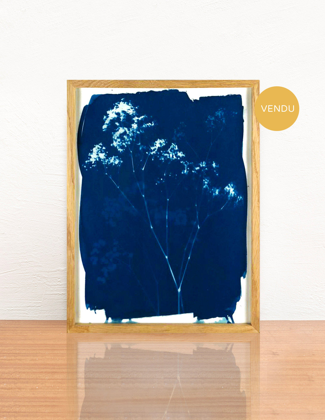 Invincible été - Cyanotype - Gypsophiles
